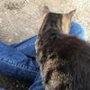 猫の重みの心地よさ