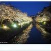 松川で夜桜見物♪