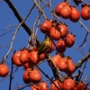 奈良公園という豊かな自然界。冬ともなれば渡り鳥も飛来して枯木もにぎやかに揺れている。