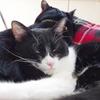 今日の黒猫モモ&白黒猫ナナの動画ー970