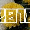 【2018年】「菊(きく)出荷量」ランキング