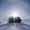 美瑛の冬景色~マイルドセブンの木etc...【1月12日撮影】