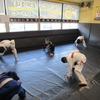 金曜日昼キッズ、夜キッズクラス、一般柔術クラス。