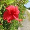 沖縄本島からフェリーでおよそ15分の久高島へ行ってきた!