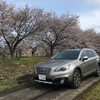 福井に春が来た!勝手に桜とアウトバック撮影会
