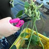 9月はえだ豆収穫体験開催中!仙川の伊藤農園でえだ豆の摘み取り体験ができます!