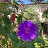 ひと花を咲かす矜持や冬の花(あ)