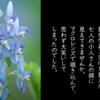 花のシーズンはもうすぐ「エゾエンゴサク」に入れ上げる