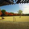 公園に秋が来た!(8)