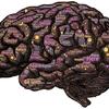 双極性障害を、個性として受け入れた。脳の誤作動を、私は愛してる。