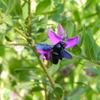 ニース Nice③ 青い蜂 Blue bee