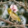 宝塚神社にて、3月21日春分の日