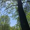 新宿の戸山公園を散歩♪♪