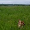 保護子犬ミメの昨日今日の散歩