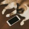 フリマアプリ「Fril」で問い合わせをしても返信が来ない時の対処法!