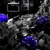 江ノ電 由比ヶ浜の紫陽花