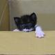 6月6日に子ネコがやって来ました。弥勒(みろく)と名付けました。