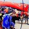湘南です14 流鏑馬(やぶさめ)ですか?笠懸です!三浦道寸祭りで楽々砂かぶり!