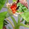 観葉植物の実と種と