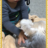 犬と赤ちゃんとの暮らし 新生児から2歳半まで