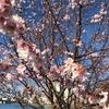 小さい春みっけ。