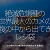 969食目「絶滅危惧種の世界最大のカメのお腹の中から出てきたレジ袋」レジ袋が2020年7月から有料化される直前に