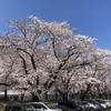 桜咲く波乱の1日
