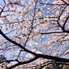 【三重県 / 湯の山温泉 / おすすめ散歩コース】春の湯の山を満喫できるおすすめポイント3選!
