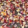 今年の落葉は今年しか見られないのだ