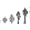 プロダクトの進化 (Sequoia Capital)