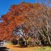 【神代植物公園 実体験レビュー(後編)】アクセス~園内の自然散策、自然観察まで、豊富な写真で紅葉の園内をご紹介