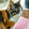 【愛猫日記】毎日アンヌさん#179