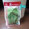 豆苗の栽培日誌