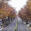 晩秋の表参道