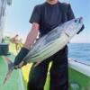 相模湾でキハダ・カツオのコマセ釣り