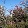 2月の白鳥庭園