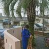 台風対策!ココスヤシなどの庭木をロープで縛って備える