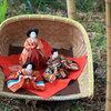 子ども雑学(3月編)ひな祭りの意味、梅の木に来る鳥、3月の童謡