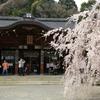 京都市山科区「大石神社」大石桜