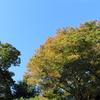 秋の風景・菊の奉納がありました