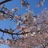 🌸春ですね~