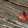 秋の夜長に、ブログを書いている理由を考えてみました。