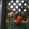 ニフレルのホワイトタイガーの餌の時間