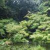 山の澄んだ空気に癒される 苔好き必見!南禅院&天授庵