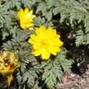 2月28日の花々