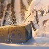 12月2日(日)からフィールドリサーチの大発見が変更
