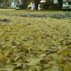 黄色いイチョウのジュウタン