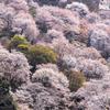 奈良で桜といったらやっぱり吉野山!中千本、上千本の撮影スポットを紹介