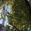 """御神木が印象的な「飛木稲荷神社」と""""おむすび""""で人気の「高木神社」に再訪しました〜♪(東京都墨田区)2019/11/10"""