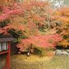 28日は瀧谷不動尊の縁日、曇天でしたが境内は秋色に。